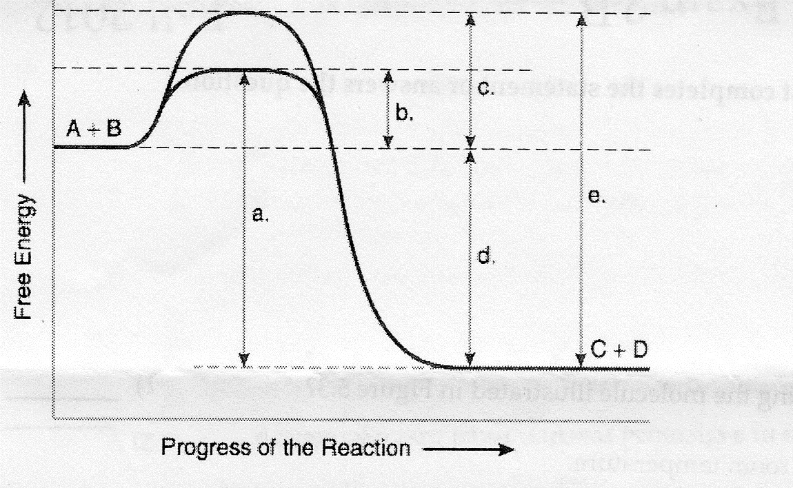 Which of the following terms best describes the forward reaction in Figure 8.1?